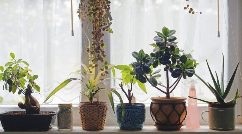 Comment donner un côté nature à sa décoration intérieure ?